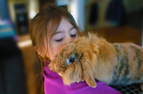 girl  rabbit  pet