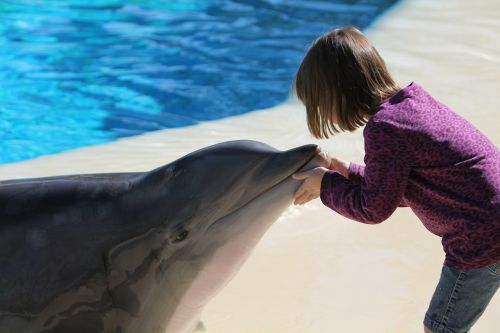 girl dolphin young