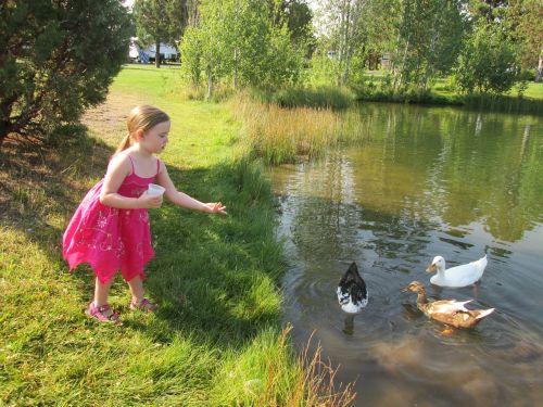girl feeding ducks duck pond