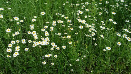 glade grass nature