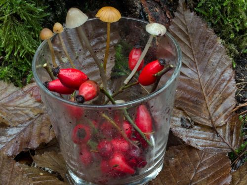 glass fruits rose hip