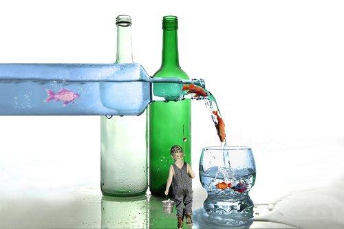 glass  bottles  fish