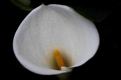glass of milk flower nature