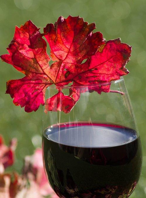 glass of wine  alcohol  vine leaf