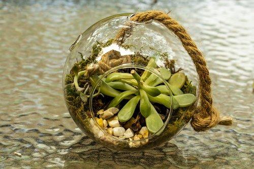 glass sphere  planter  cactus