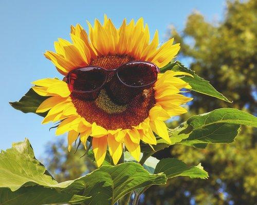 glasses  sunglasses  sun