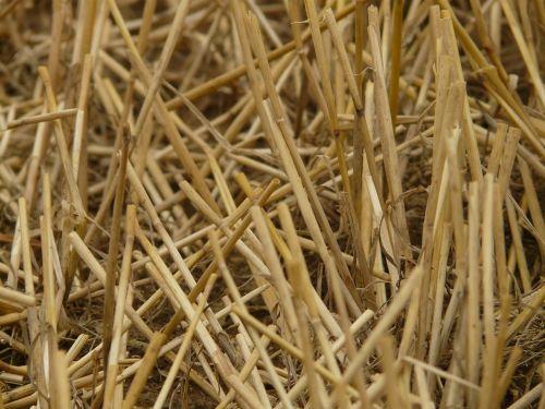 glean stubble harvest