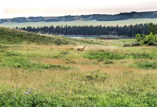 glenbow ranch provincial park deer park