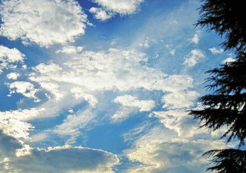 dangus, mėlynas, debesys, laisvas, balta, blizgantys, medis, blizganti debesys