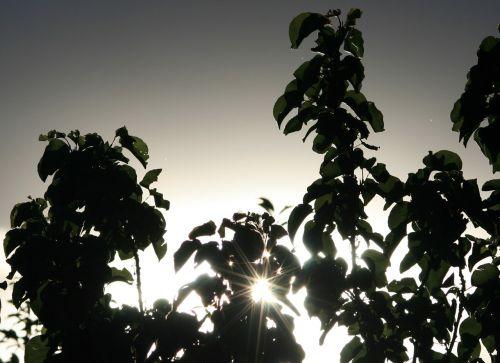 glistening sun late sun foliage