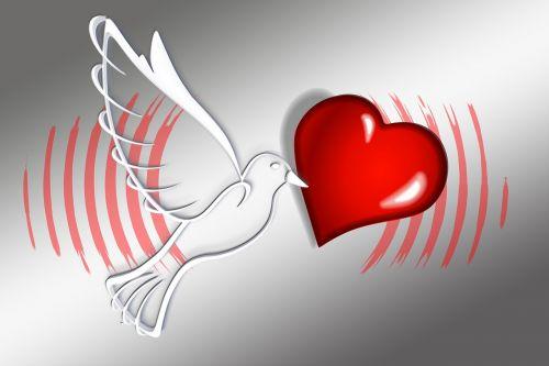 global dove love