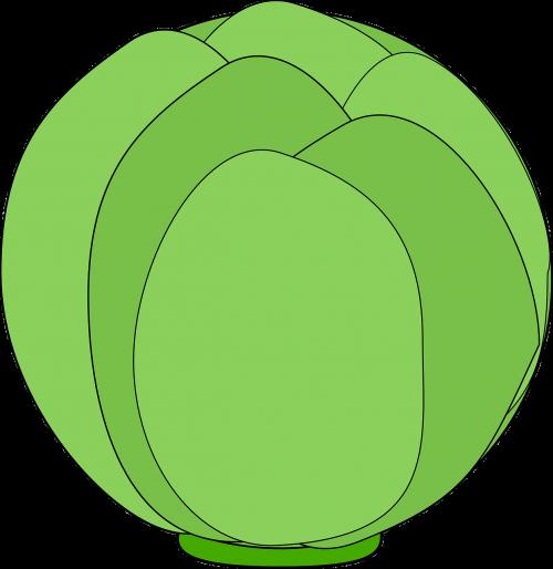 globe artichoke artichoke bud thistle bud