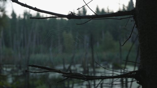 gloomy  spiderweb  lake