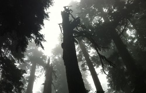 gloomy forest fog