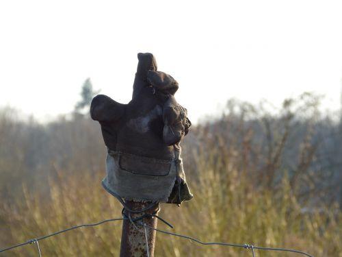 glove post nature