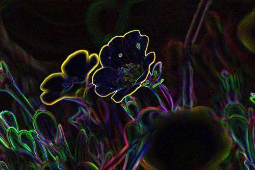 Glowing Edges Flowers