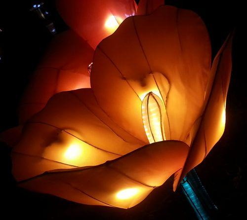 Glowing Tulip Japanese Lantern