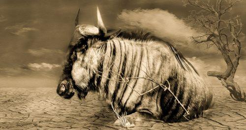 gnu wildlife drought