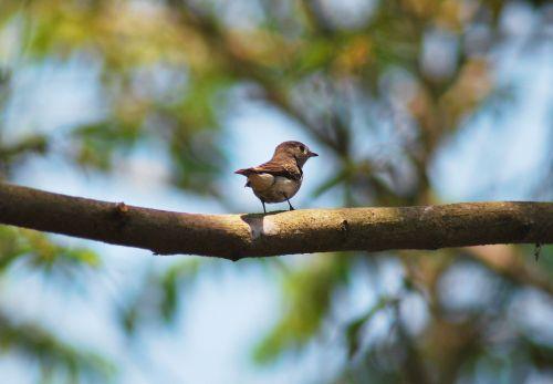Goa Small Bird