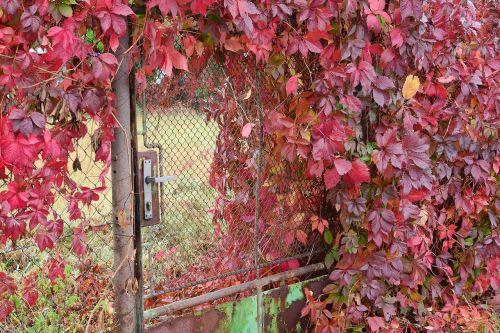 goal overgrown plot gate