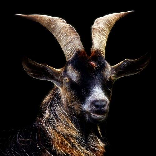 goat  fractalius  profile picture