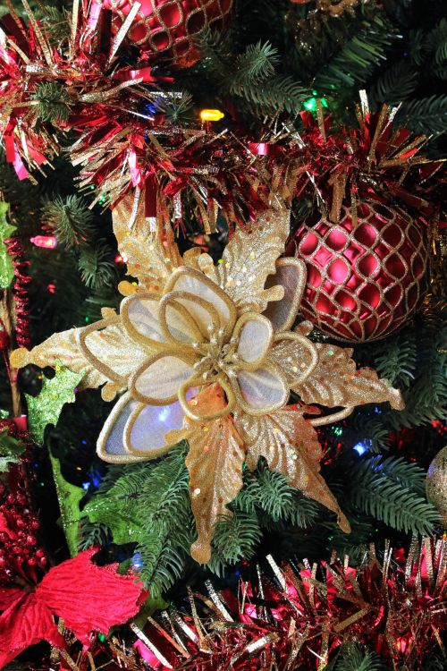 Gold Poinsettia And Red Tinsel