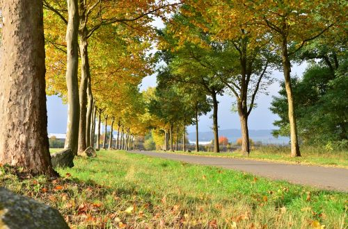 golden autumn autumn forest fall colors