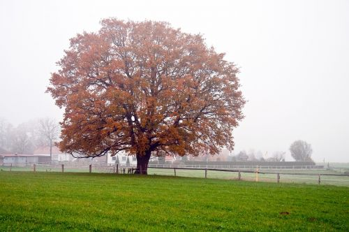 aukso ruduo,nuotaika,kritimo spalva,kraštovaizdis,medžiai,rudens nuotaika