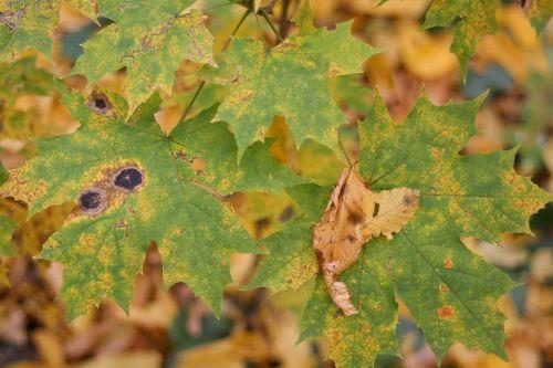golden autumn macro autumn