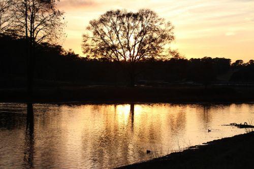 golden light park nature