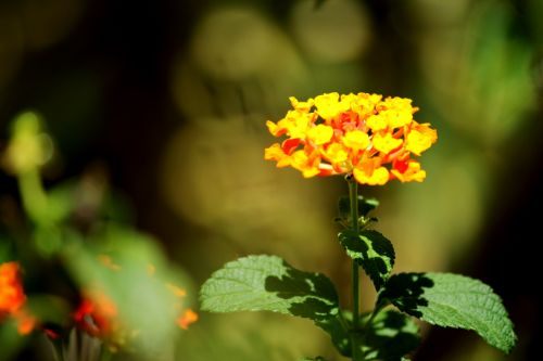 Golden Orange Flower