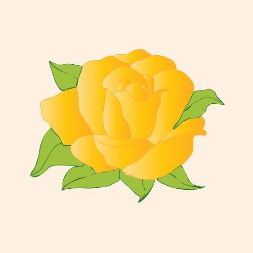 Golden Rose Flower
