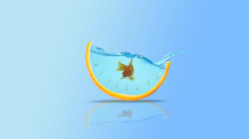 goldfish fish aquarium