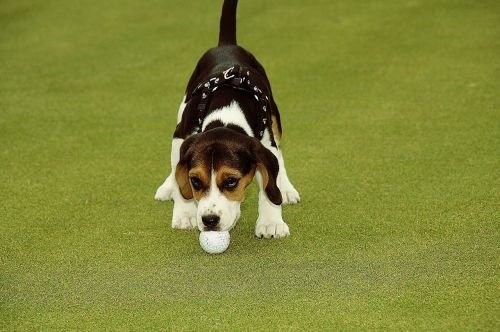 golf golfer ball