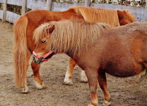 pony animal rescue horses
