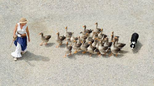 goose geese girl
