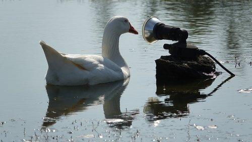 goose home  water plan  dialogue