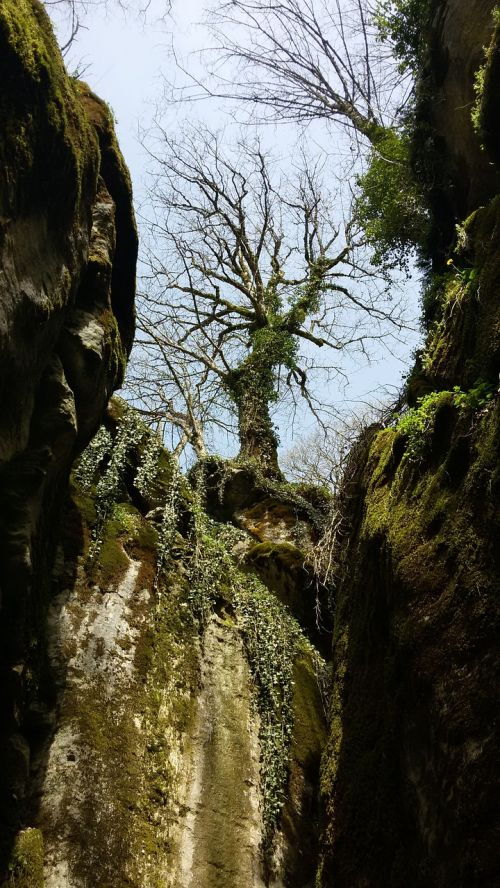 gorge tree in spring rocky gorge