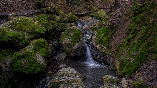 gorge  moss  nature