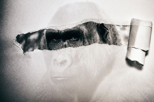 gorilla paper black and white