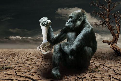gorilla hunger environmental awareness