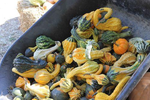 gourd autumn fall