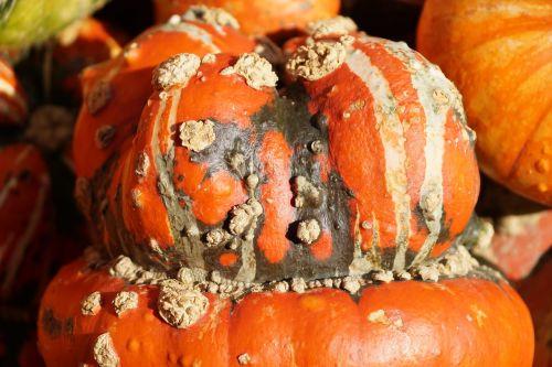 gourd pumpkin autumn