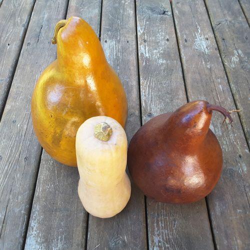Gourd Squash And Pumpkin