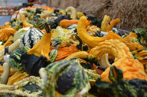 gourds fall autumn