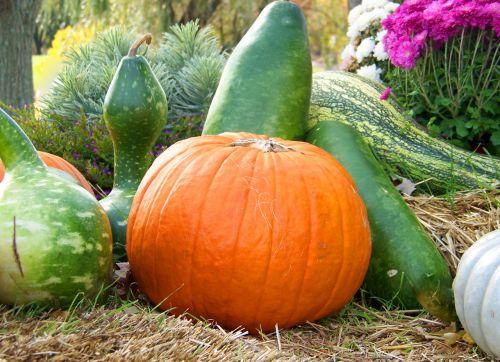 moliūgai, moliūgas, gėlės, šienas, kritimas, ruduo, Halloween, moliūgai ir moliūgai