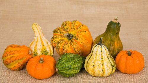 ruduo, spalvinga, apdaila, kritimas, ūkis, maistas, moliūgas, moliūgai, Halloween, derlius, daug, lapkritis, dekoratyvinis, moliūgas, moliūgai, sezonas, sezoninis, mažas, skvošas, daržovių, moliūgai ir moliūgai