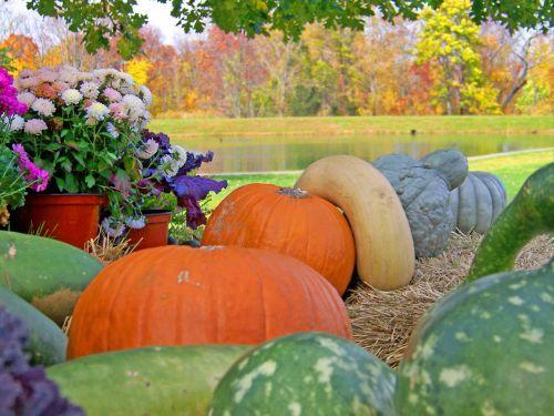 moliūgai, moliūgas, gėlės, šienas, tvenkinys, medžiai, kritimas, ruduo, Halloween, moliūgai, moliūgai priešais tvenkinį