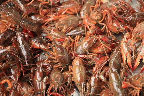gourmet lobster crayfish
