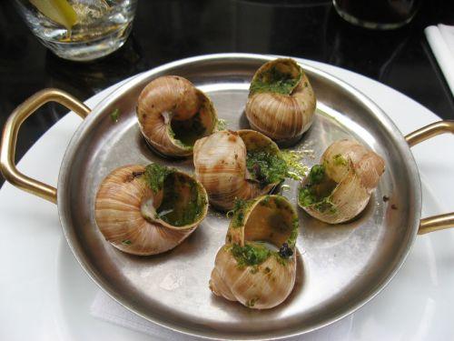Gourmet Dish Of Escargots